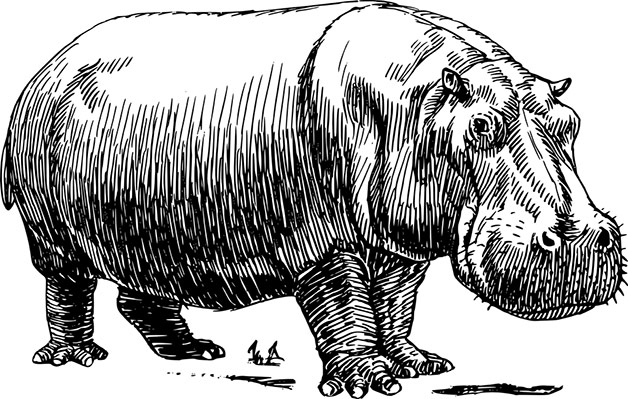Illustration of hippo
