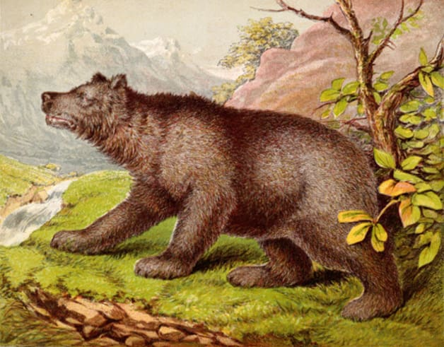 """The brown bear."" Illustration by Joseph Martin Kronheim, published in The Child's Picture Book of Wild and Domestic Animals by Unknown Author (1872), George Routledge and Sons."