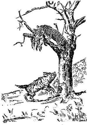 """I cannot climb a tree."" Illustration by Oliver Whitwell Wilson, published in African Stories by Albert D. Helser (1930), Fleming H. Revell Company."